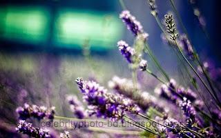 Beautiful%2BNatural%2Bhd%2BFlaowar%2BWallpaper038