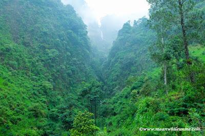"Hutan ala ""Avatar"" terbentang di Petungkriyono Curug Muncar"