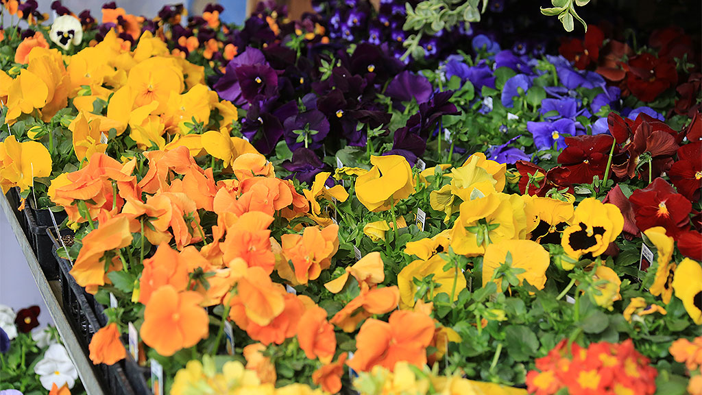 Indianapolis Flower And Patio Show   Aroundindy Com Blog Indianapolis  Events Five Tips For