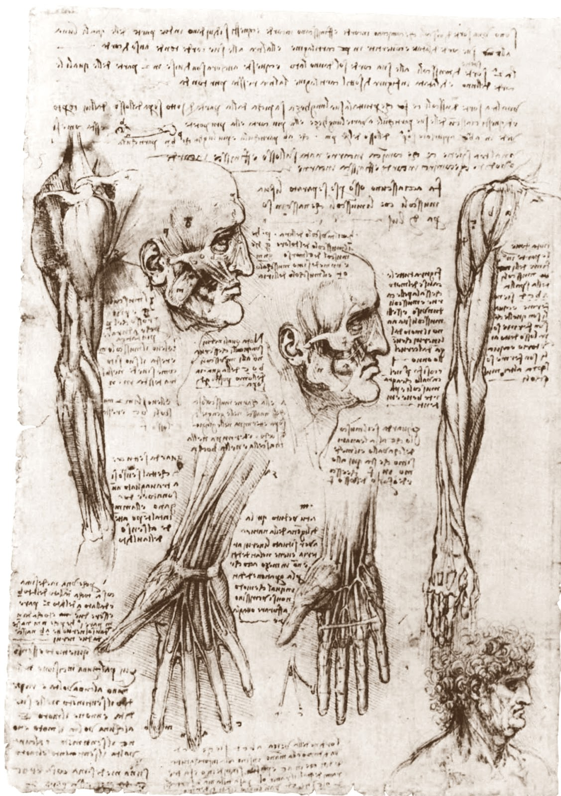 Leonardo  da  Vinci  drawing