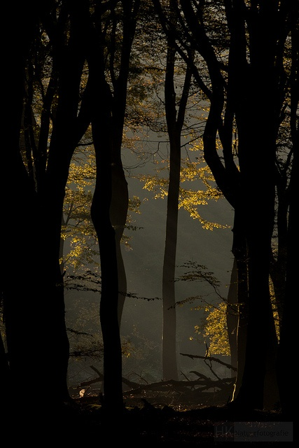 The dancing trees by hknatuurfoto (Hans Koster) on Flickr as seen on linenandlavender.net