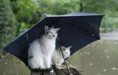 berteduh, foto kucing berteduh, kucing lucu, kucing hujan