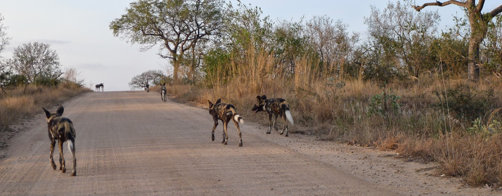 Worldbirder: Wild Dog - Photo essay