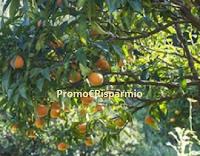 Logo Prova a vincere gratis 1 cassetta da 20 kg di agrumi bio dalla Sicilia