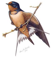 Aves da América do Norte
