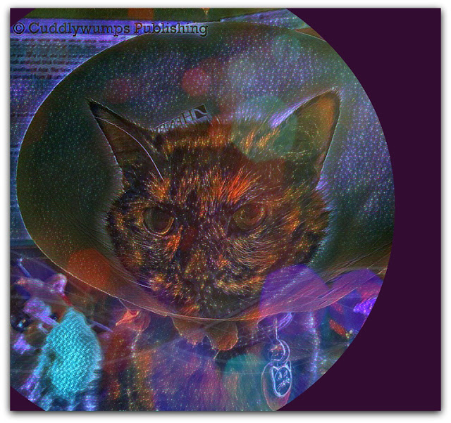 Real Cat Paisley--Nebula