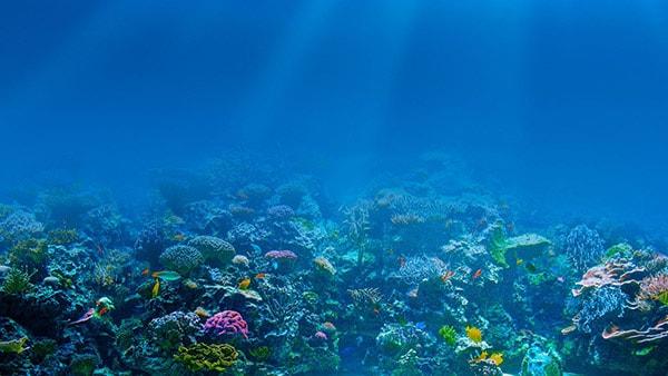 риф Туббатаха