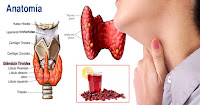 https://steviaven.blogspot.com/2018/05/restaura-tu-glandula-tiroides-con-esta.html