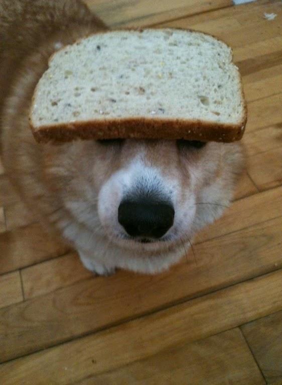 כלבה עם פרוסת לחם על הראש