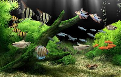 Daftar Ikan Hias Yang Bisa Di Campur Lovedfish