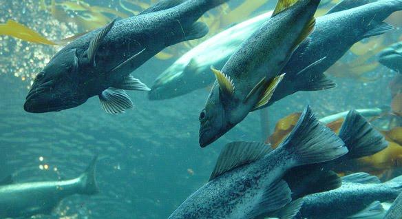 87 Gambar Hewan Air Laut HD Terbaik