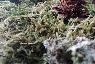 Bulles de Plume Le jardin du lutin