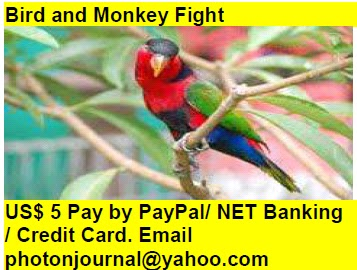 Bird and Monkey Fight bird story book