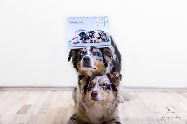 Aussieblog_Kalender, Indinaermädchen, Wildfang, Erik Räven, Hundefotografie