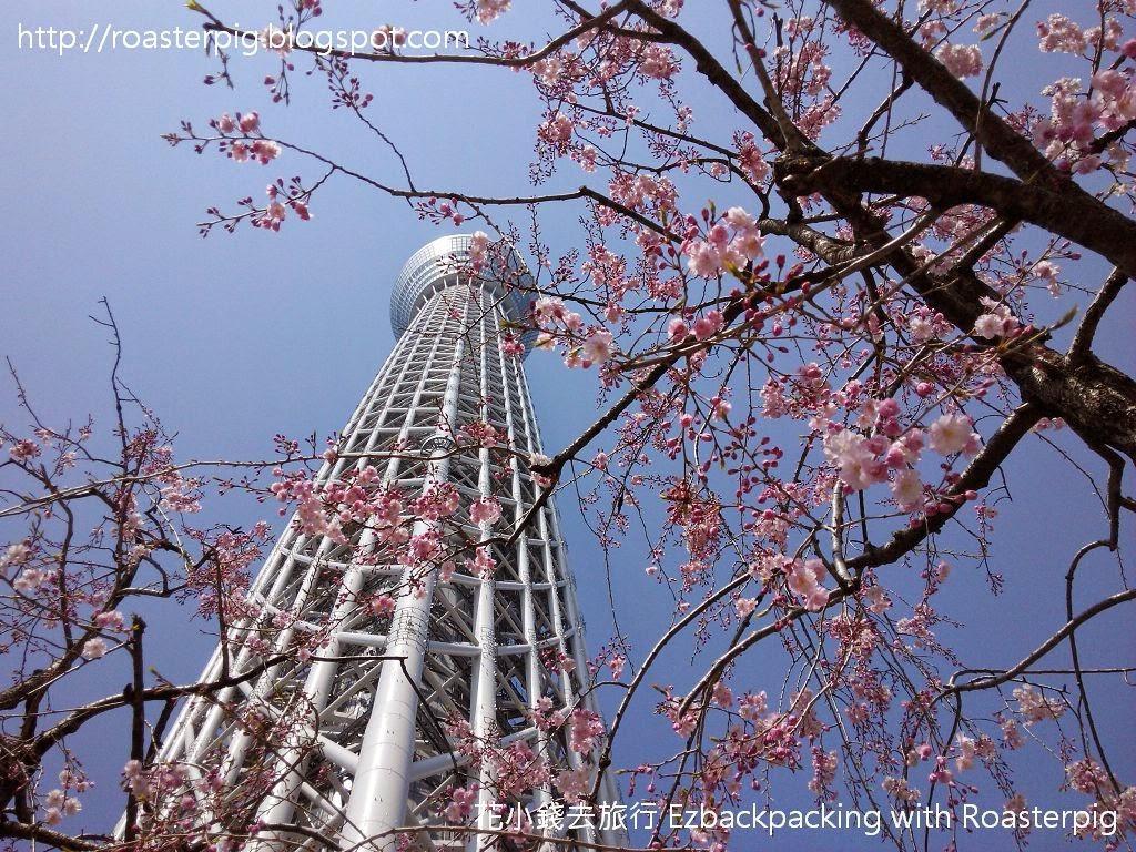 2015年日本首爾+日本賞櫻之旅