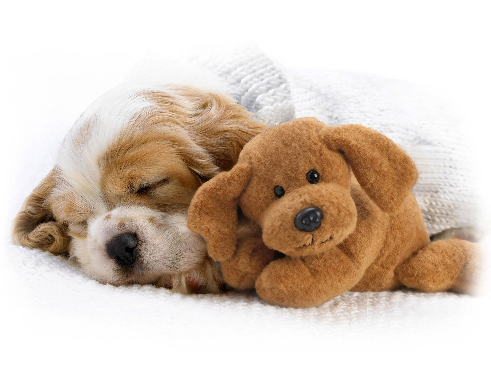 Wallpapers and pictures of cute puppies | Nice Wallpapers ...