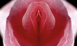 vagina, clítoris, vulva, sexo, amor, deseo, Fotografía erótica creativa, flores eróticas, rosas eróticas,