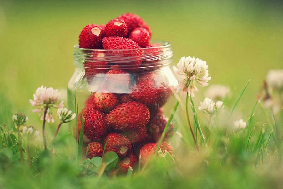 strawberries-grapes-flowers-herbs-summer-nature-wallpaper