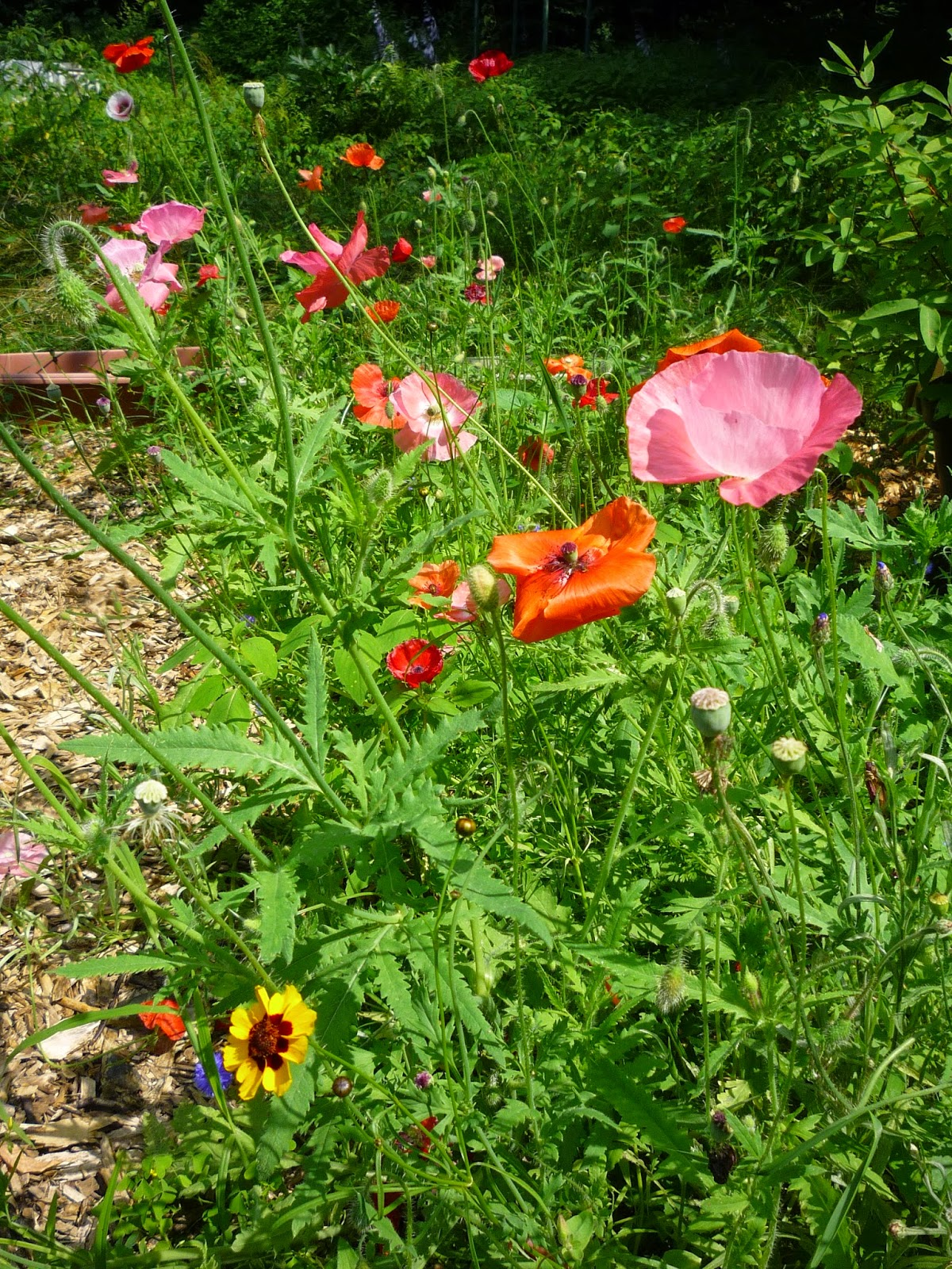 vermont backyard flowers smallest sounds summer sitting in the