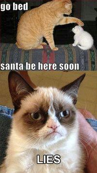 Grumpy Cat Memes 5
