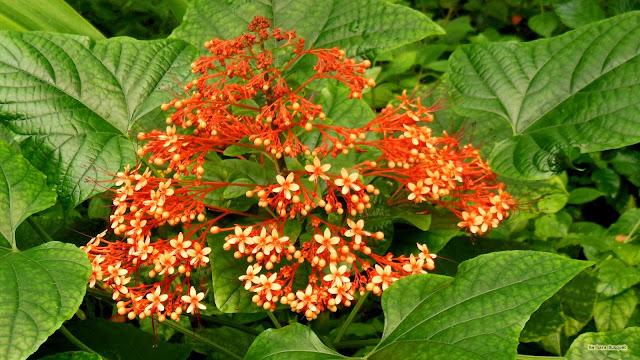 Kleine bloemetjes en grote groene bladeren