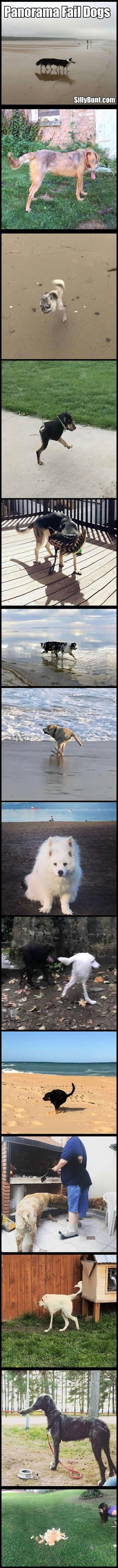 Funny Panorama Fail Dogs Picture Collection