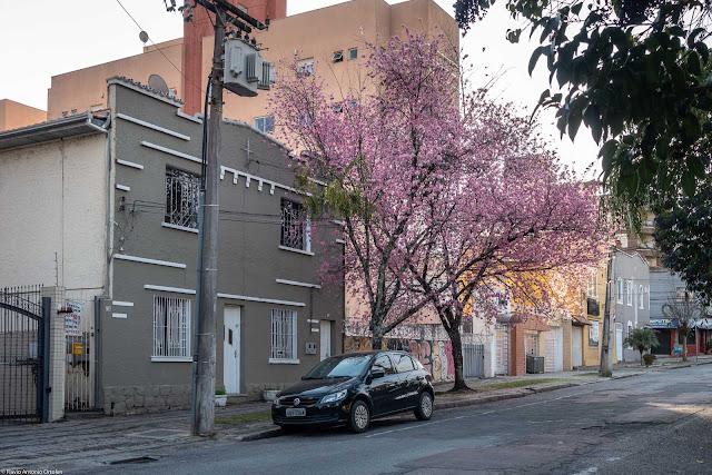 Casa na Alameda Prudente de Morais com árvore florida na frente
