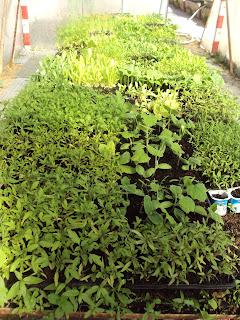 semillero invernadero huerto escolar