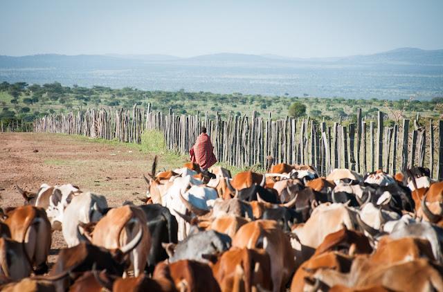 Masai, Masai Mara, Kenya