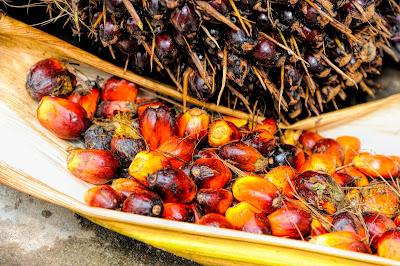 Fotografía que muestra las semillas de palma africana recién recolectadas y sin procesar