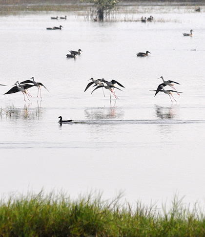 Wetlands Habitat