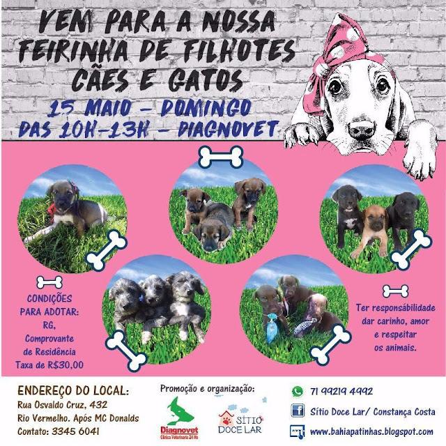 Nesse domingo tem feirinha de filhotes de cães e gatos no Rio Vermelho