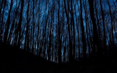 dark trees widescreen hd wallpaper