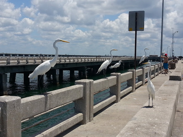 South Skyway Fishing Pier Floride