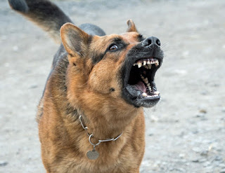 Attention! Chien qui mord