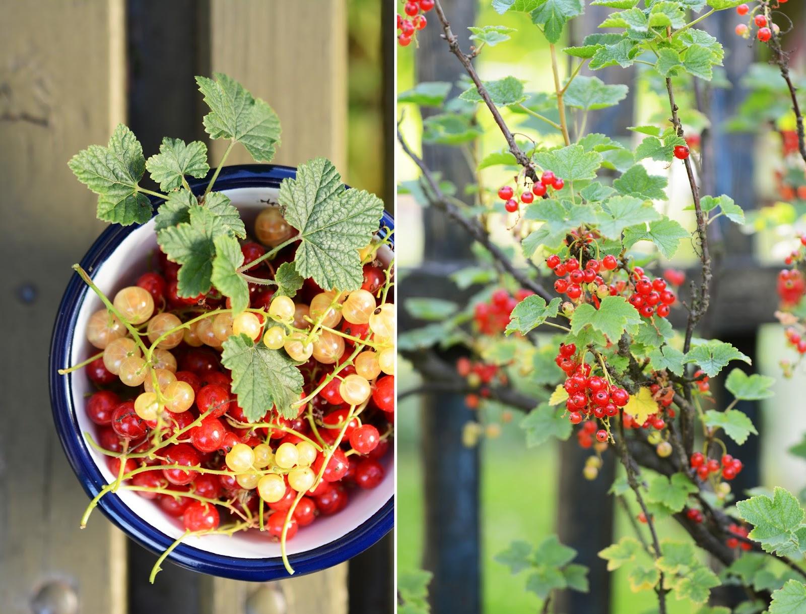 Emalco Enamelware - emalia - miseczka - porzeczki - owoce