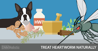 http://www.dogsnaturallymagazine.com/5-natural-heartworm-treatment-alternatives/