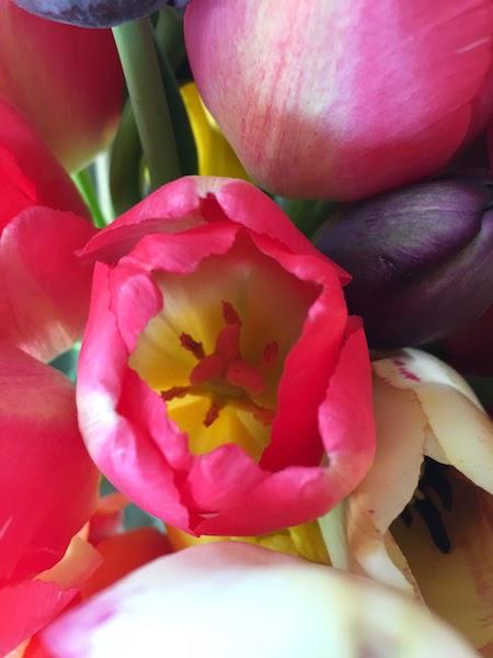 faire un bouquet de fleurs avec les tulipes de la ferme de Gally