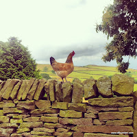 Hen on a wall