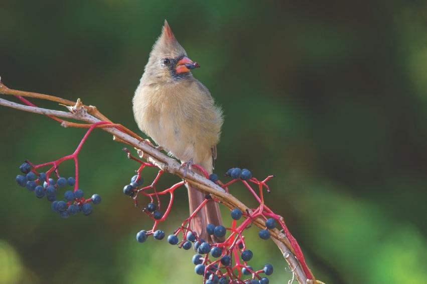 Image result for fruit nuts animals november gatherings