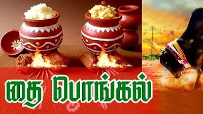 Why is Pongal Celebrated