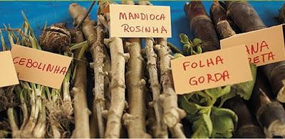 Show de violeiros na Feira de Troca de Sementes das comunidades quilombolas do Vale do Ribeira