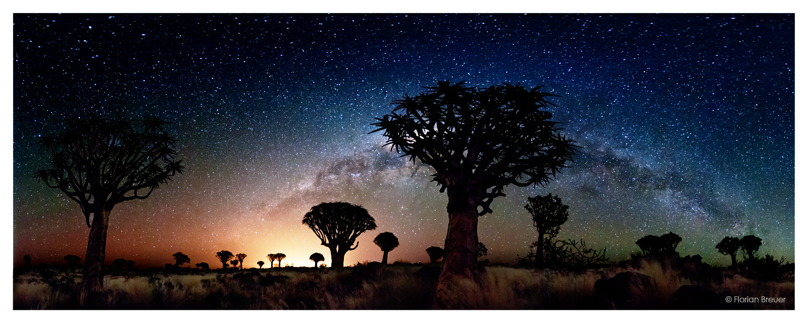 Namibian quiver trees and the glow of a galaxy - Bad