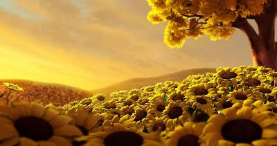 sun-flower-land-looks-yellow-golden-heaven