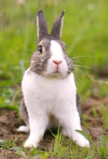 Conejos de Mascotas