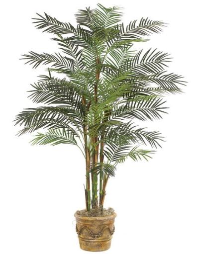 Palmierul Bambus este foarte bun pentru reducerea umiditatii