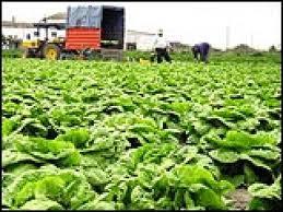 El Potasio, nutriente esencial en la agricultura