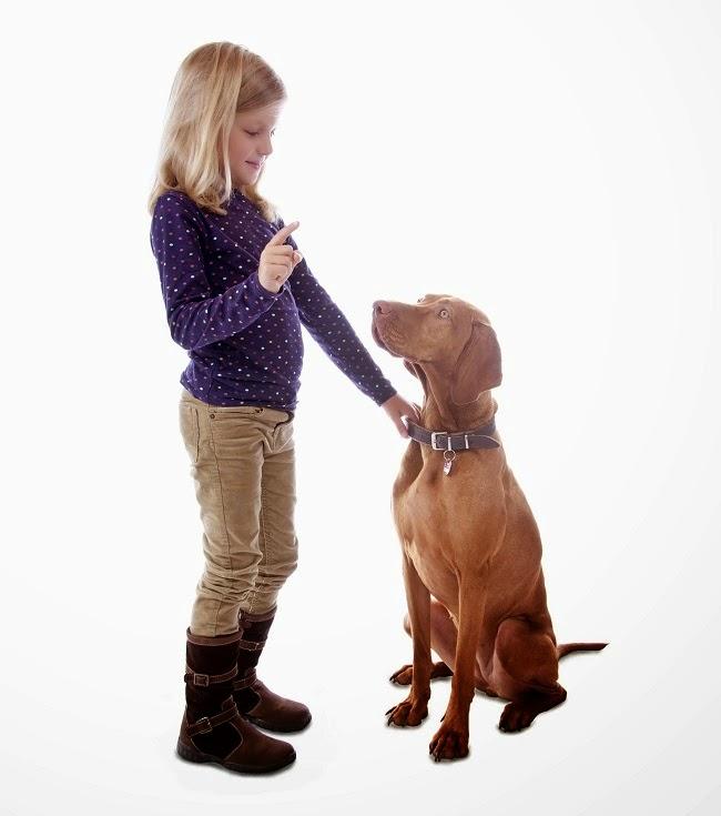 Dawanie psu smakołyków, podczas szkolenia