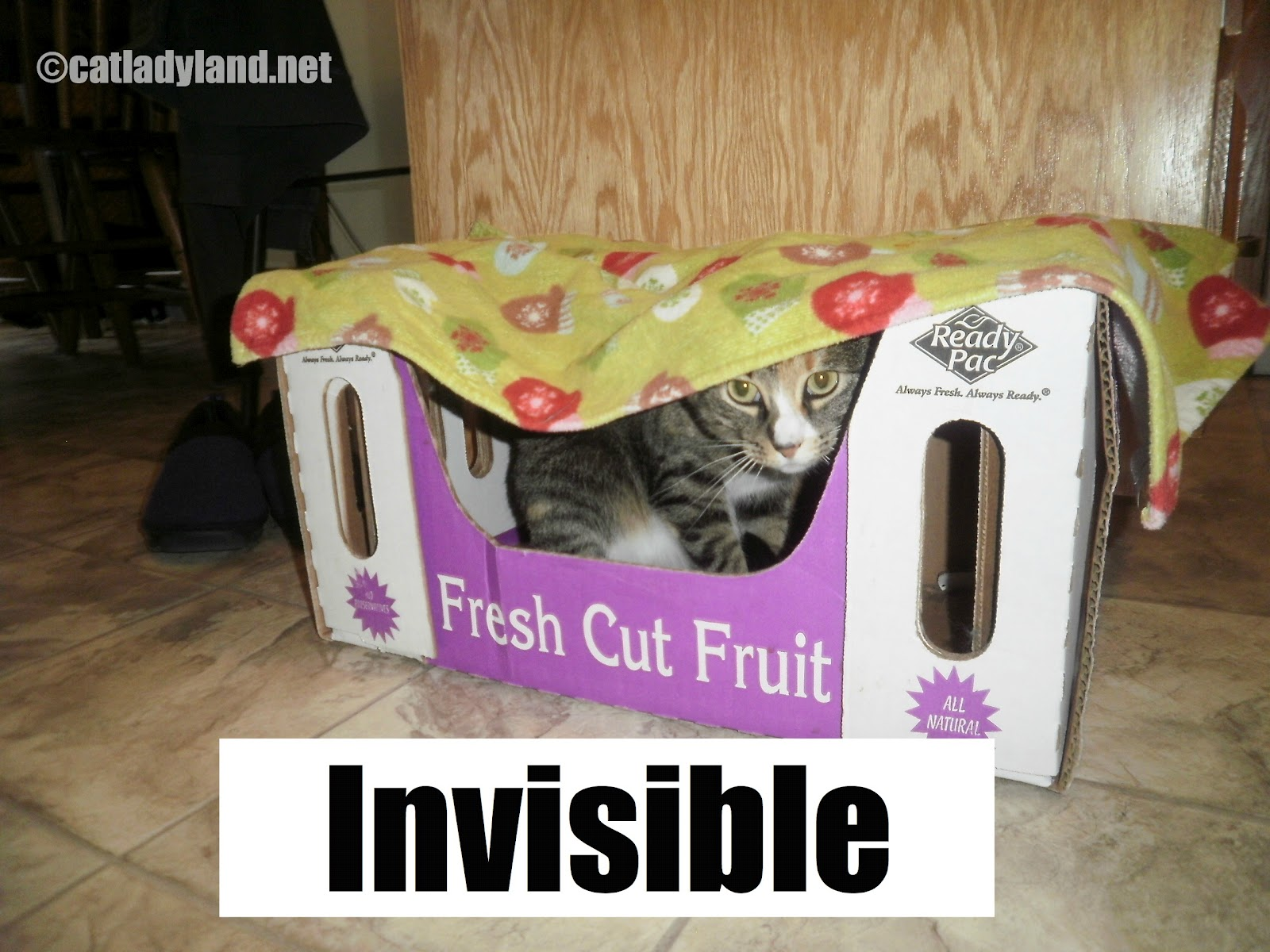 Catladyland: Cats are Funny: Cats Have Super Powers