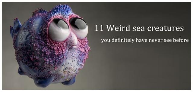 Weird sea creatures   Weird List   Weird Creatures
